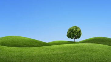 A Tree on the Green Hills Landscape Image Background 3840x2160
