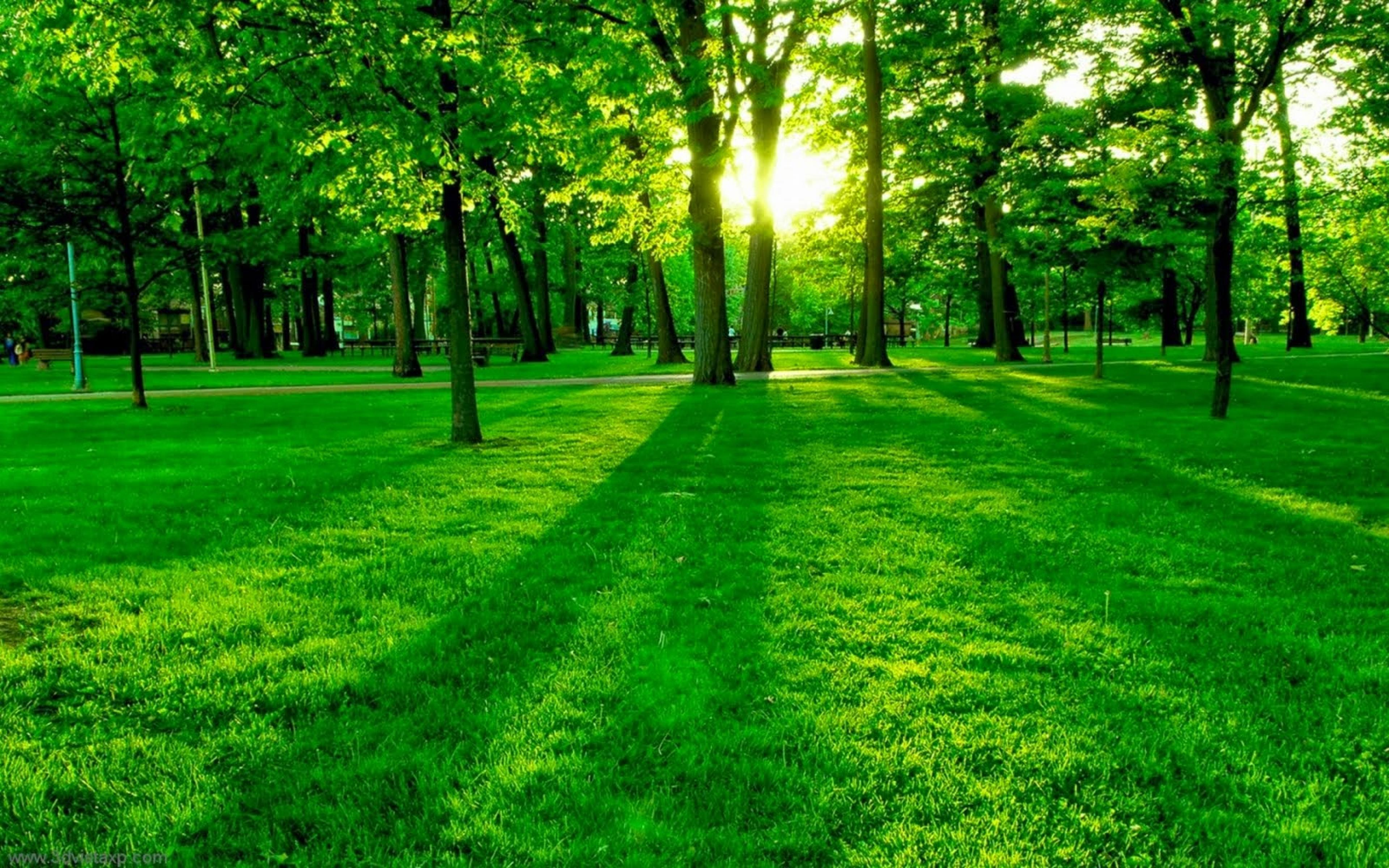 Green Forest Background wallpaper for desktop