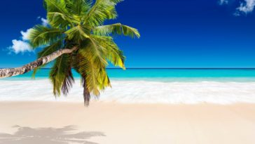 Tropical Beach Picture 4k HD Wallpaper for Desktop
