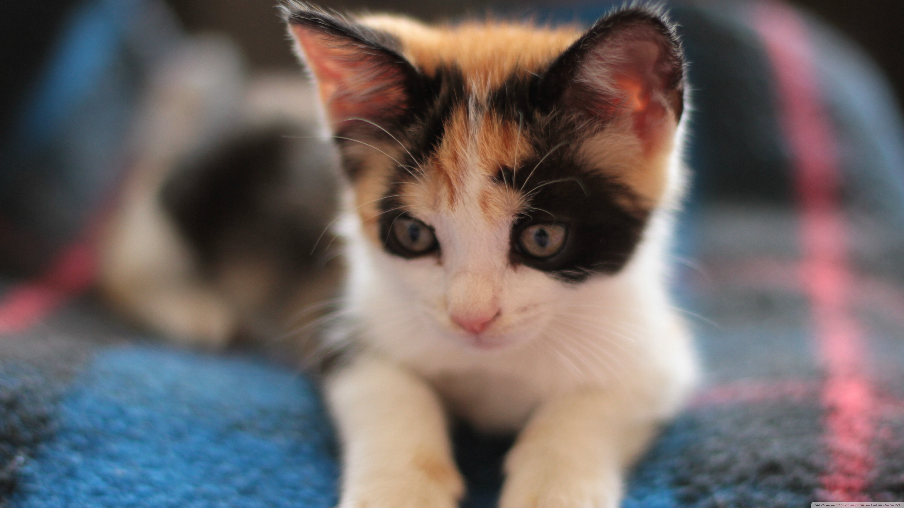 kitten 4k photo wallpaper 3840x2160