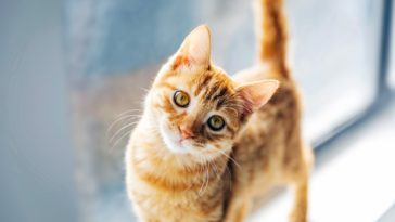 Cute Cat Closeup Photography Wallpaper
