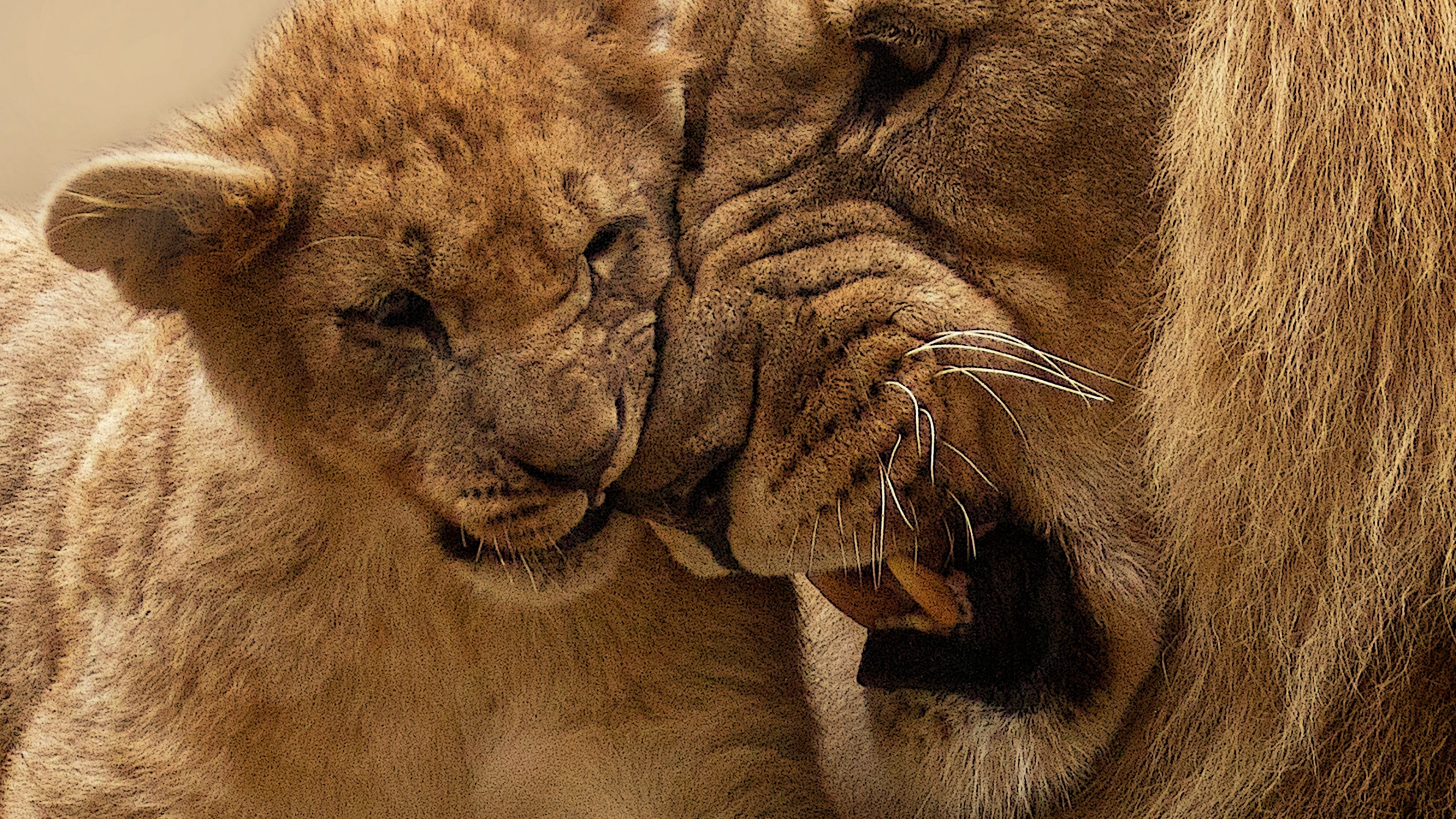African Lion and Lion Cub HD Wallpaper 4K