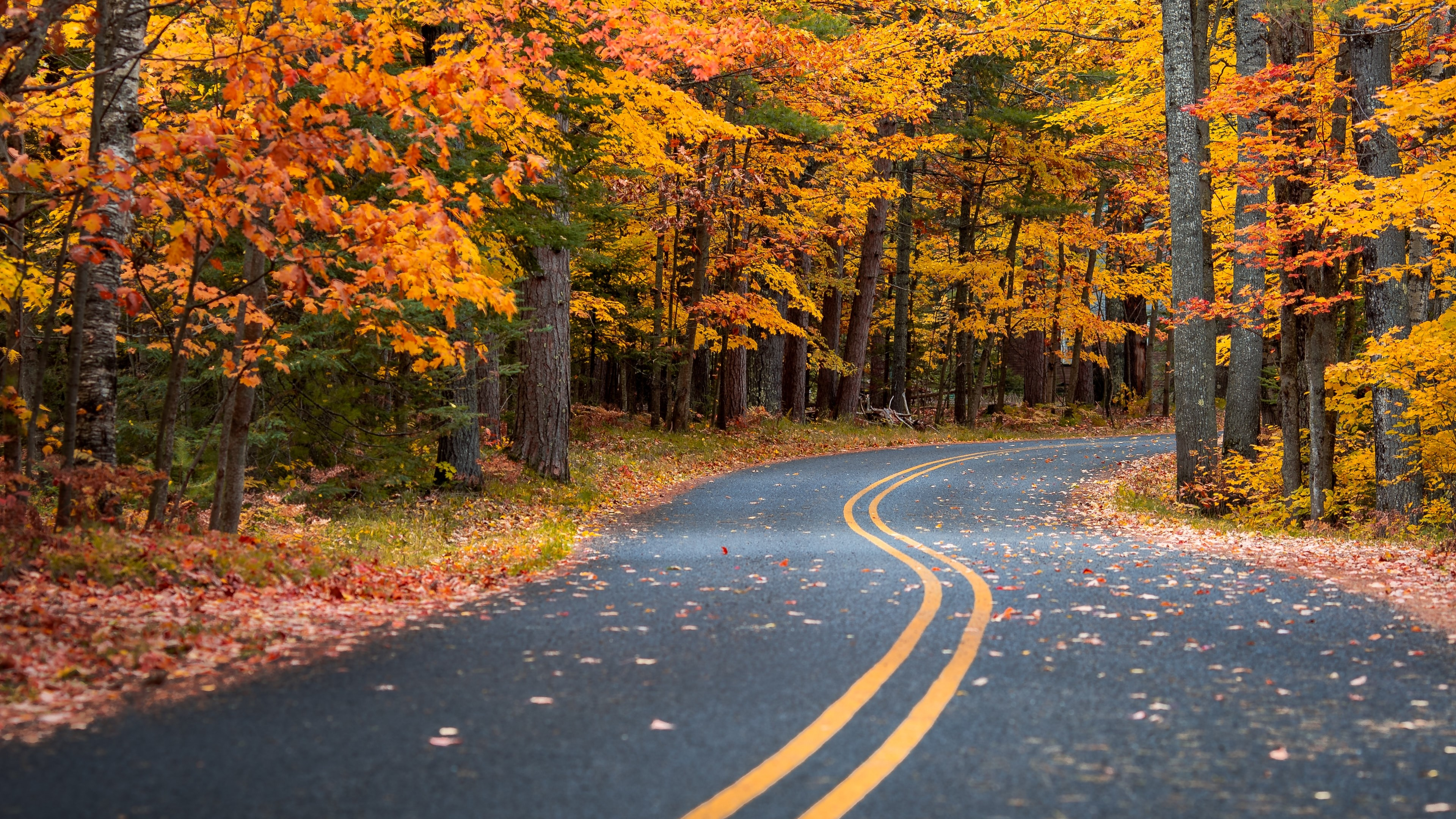 Autumn Road Scenery Wallpaper for Desktop