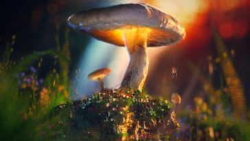 Mushroom Photo HD Wallpaper