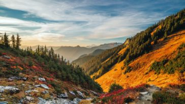 Spectacular Autumn Tree Mountains View - Nature HDR Photography