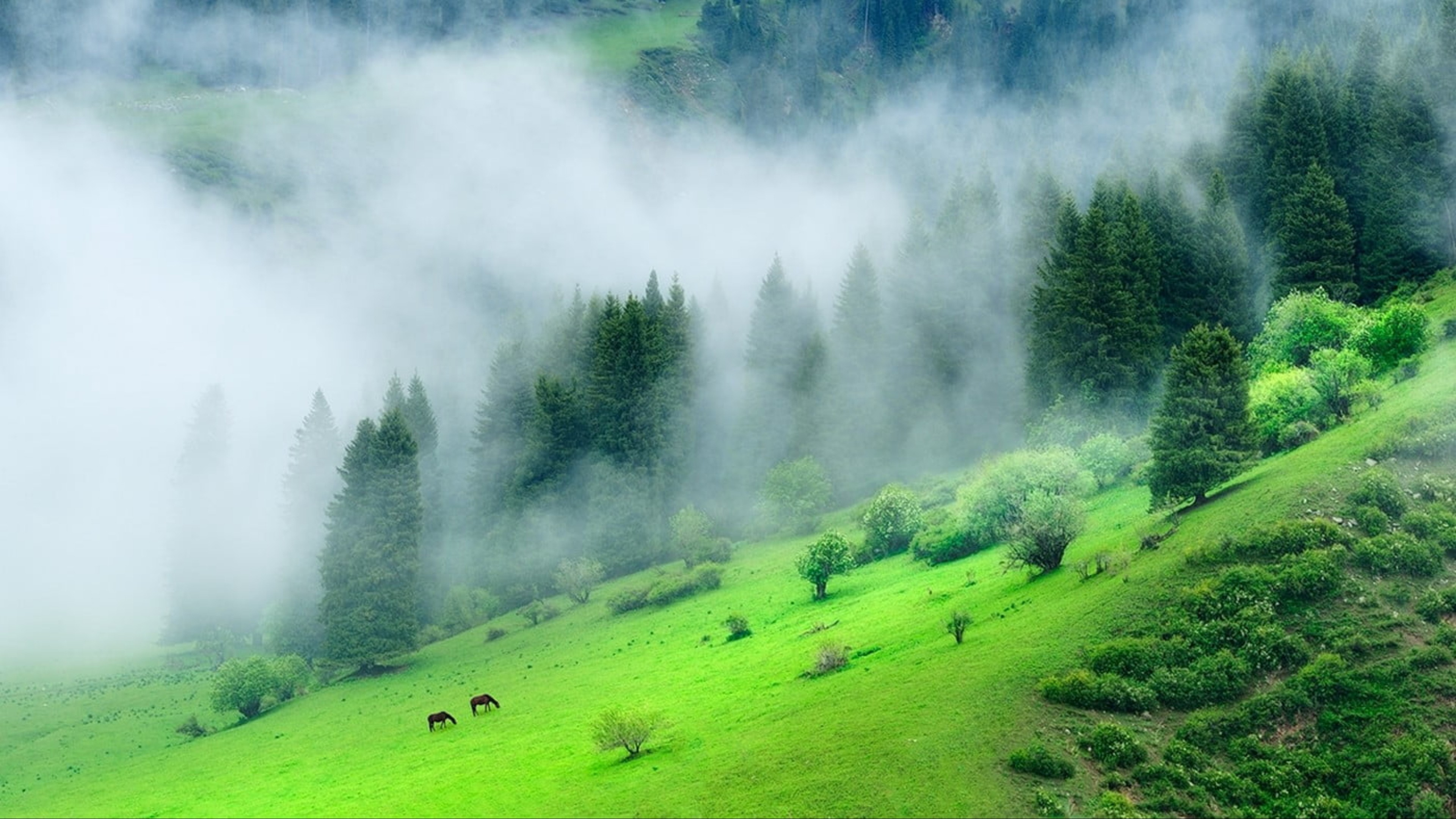 Green Forest Mountain Morning Time Wallpaper-3840x2160