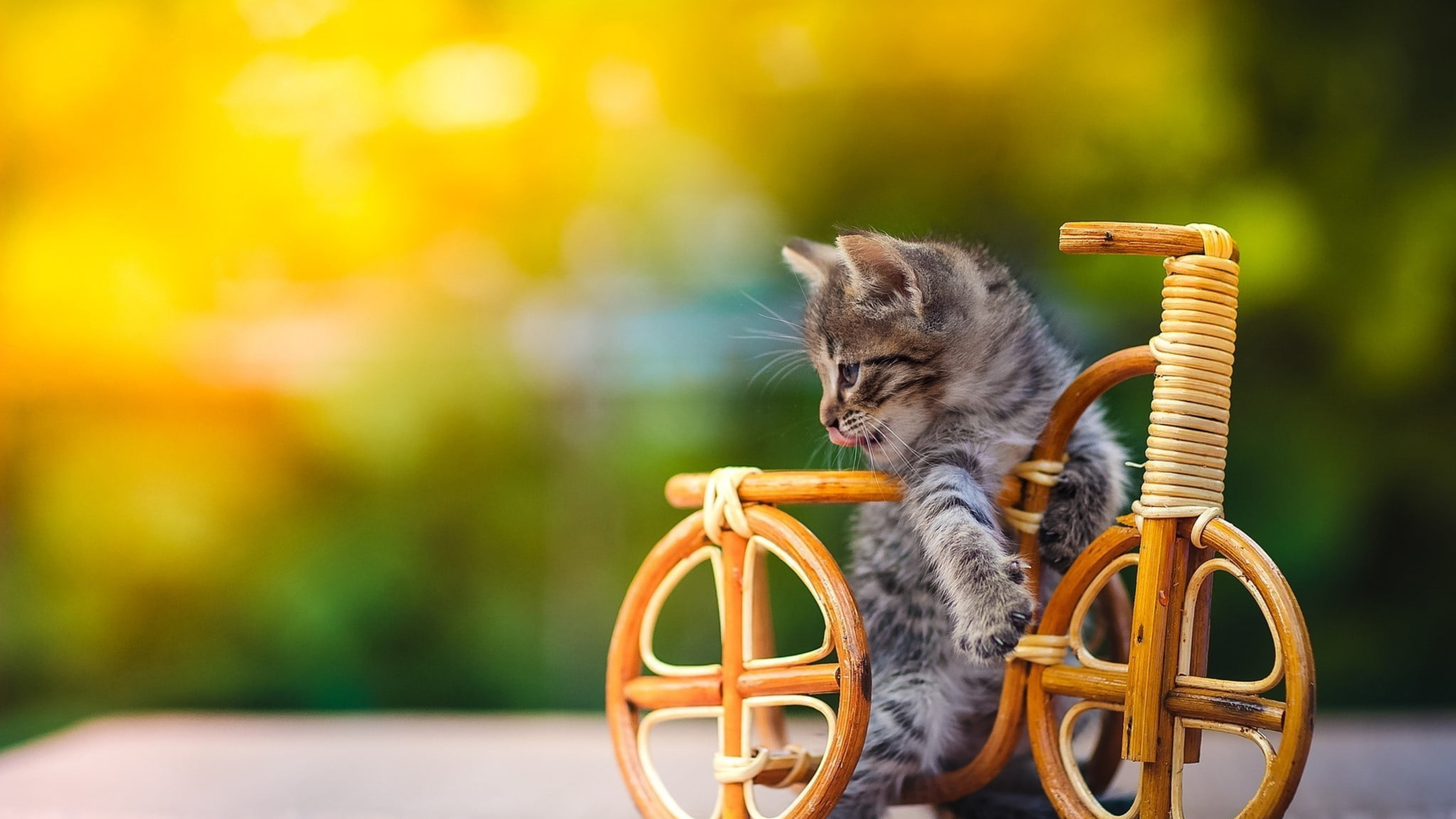 Kitten On Wooden Bicycle 4K Background HD 3840x2160